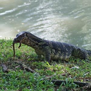 Lumphini Park и другие парки Бангкока